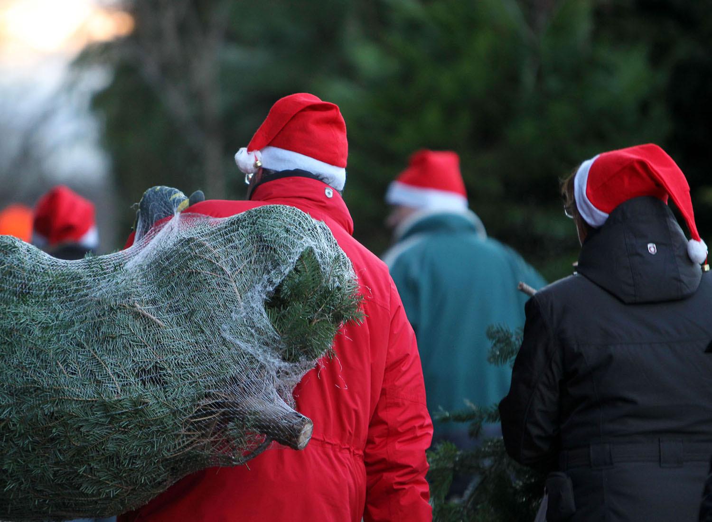 Weihnachtsbäume, Weihnachtsevents, Tannenbaumschlagen